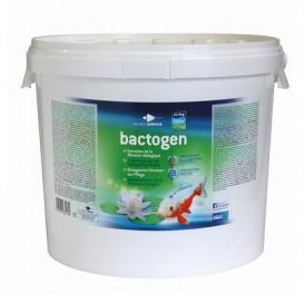 traitement_eau_bactogen_500m3_bassin_koi