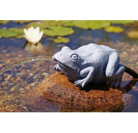 fontaine-gargouille-grenouille_bassin-koi-002