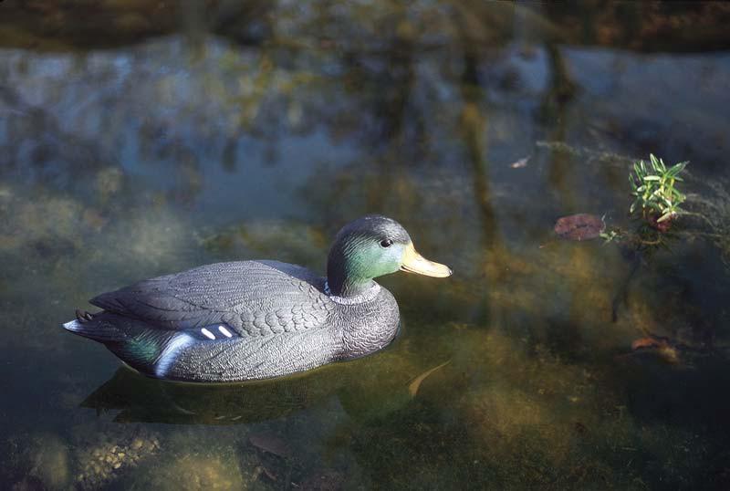 Figurine pour bassin colvert maleoase for Geotextile bassin