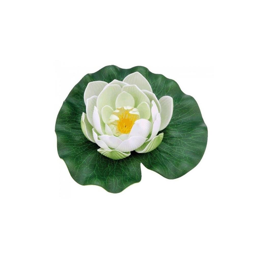 nenuphar-pondolily-blanc-bassin-koi