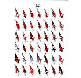 bassin_poster_koi-n°1_66cm_97cm_1