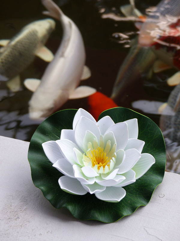 fleur_lotus